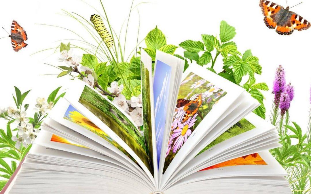 «Чудесно с книгой наше лето!»